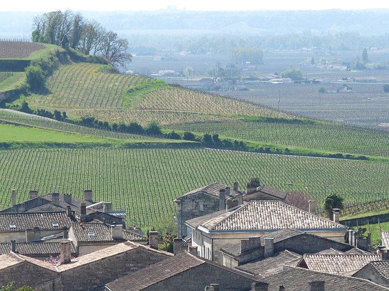 Vineyards in St_Emilion bordeaux