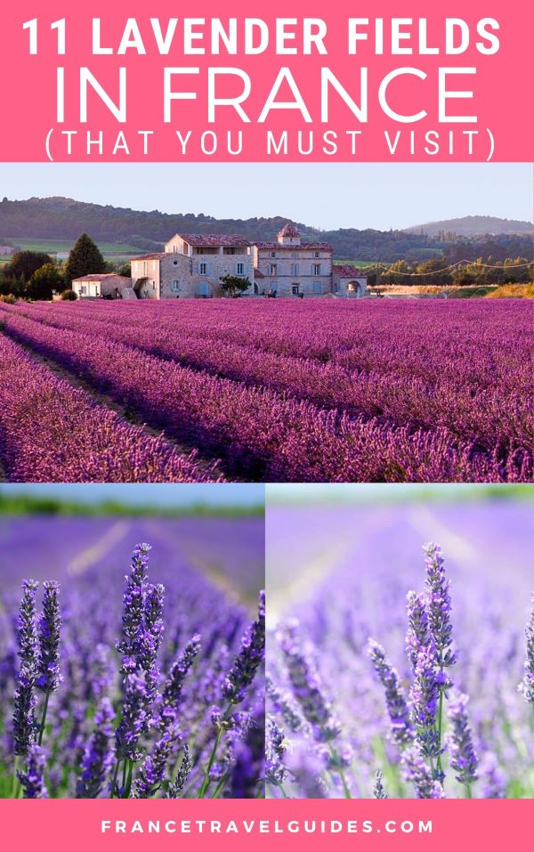 11 BEST LAVENDER FIELDS IN FRANCE THAT YOU MUST VISIT