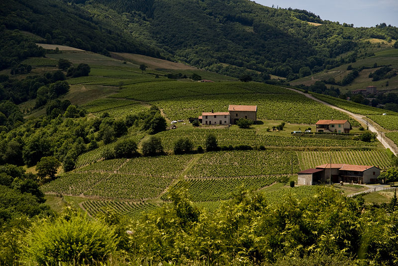Beaujolais wine country