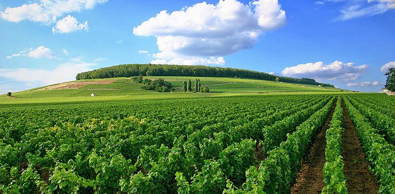 Cote de Nuits vineyards