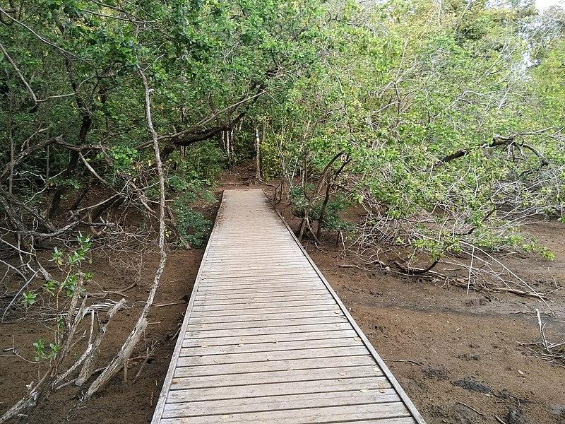 La Caravelle Trail