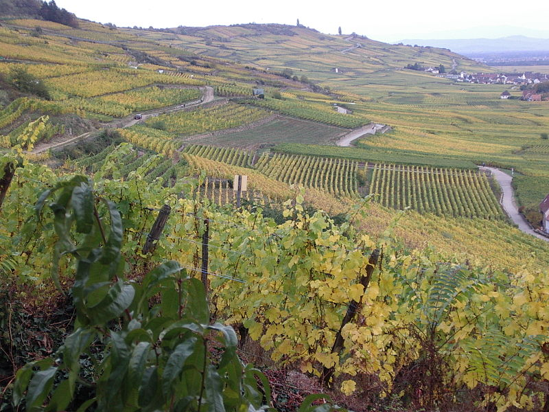 kaysersberg vineyards