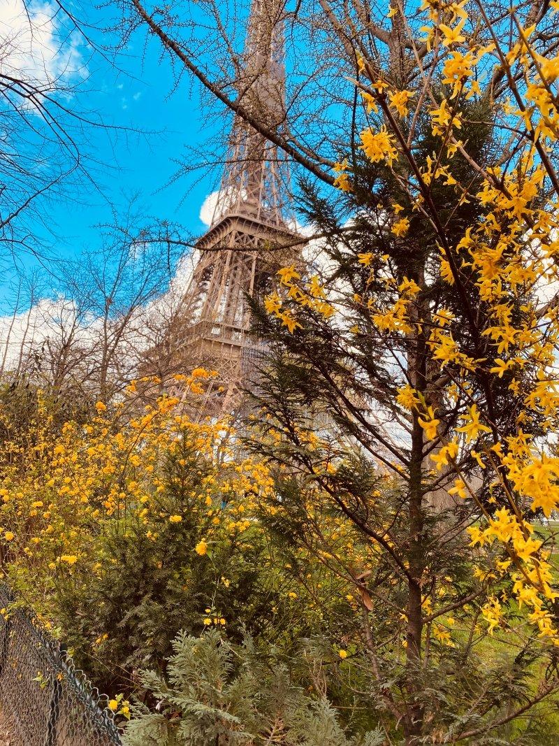 eiffel tower in spring season